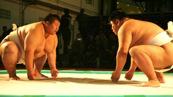 miniatura sumo